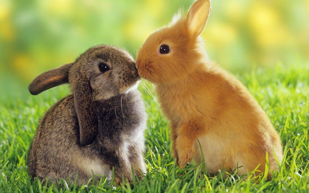 Pro e Contro del tenere i conigli in casa