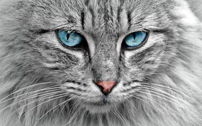 Perché i gatti fanno le fusa?