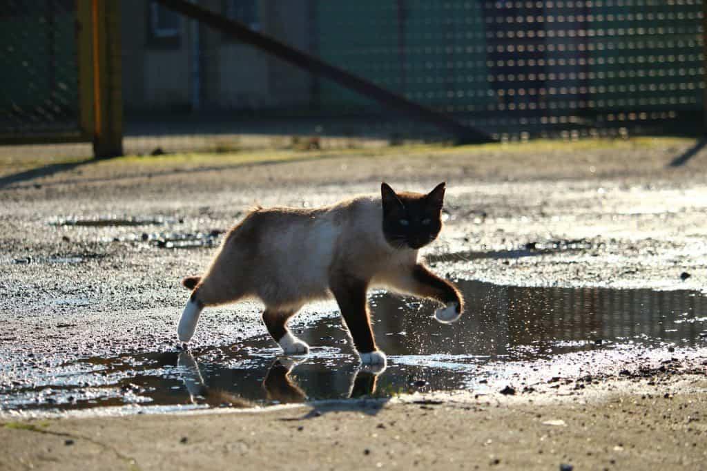 gatti odiano l'acqua