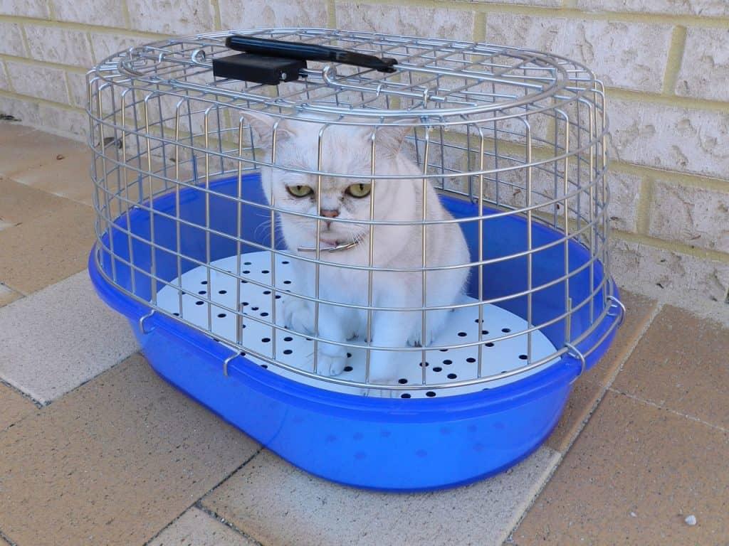 trasportino per gatti modelli