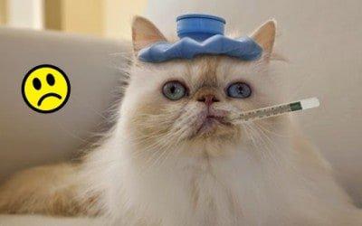 Comportamento del gatto malato, tutto quello che c'è da sapere