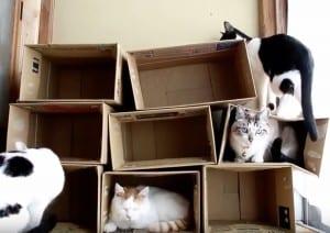 Gioco Per Gatti Dai da te