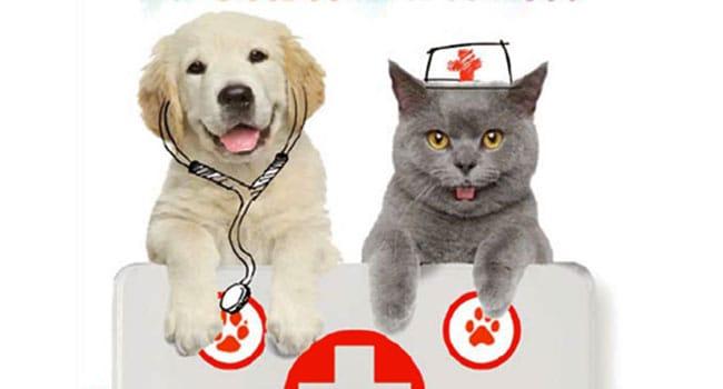 Assicurazione Cane Gatto